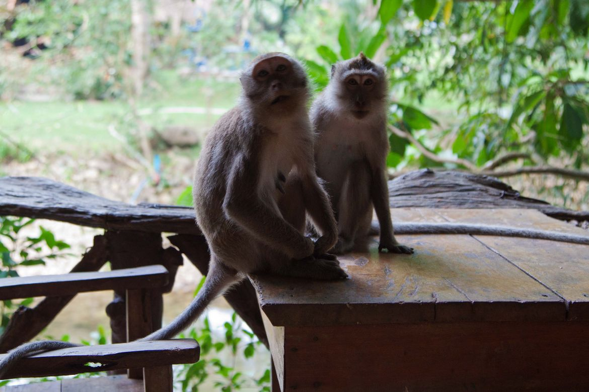 Monkeys Art's Riverview Lodge