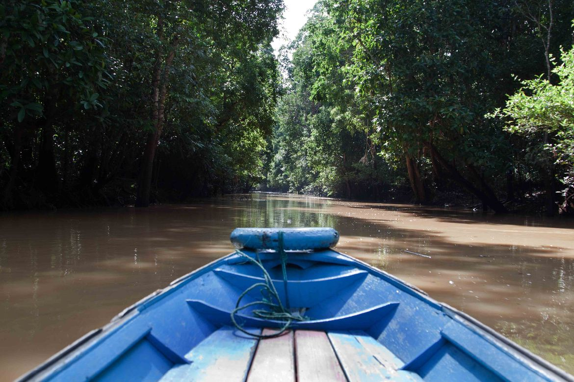 Ohong river jungle Kalimantan