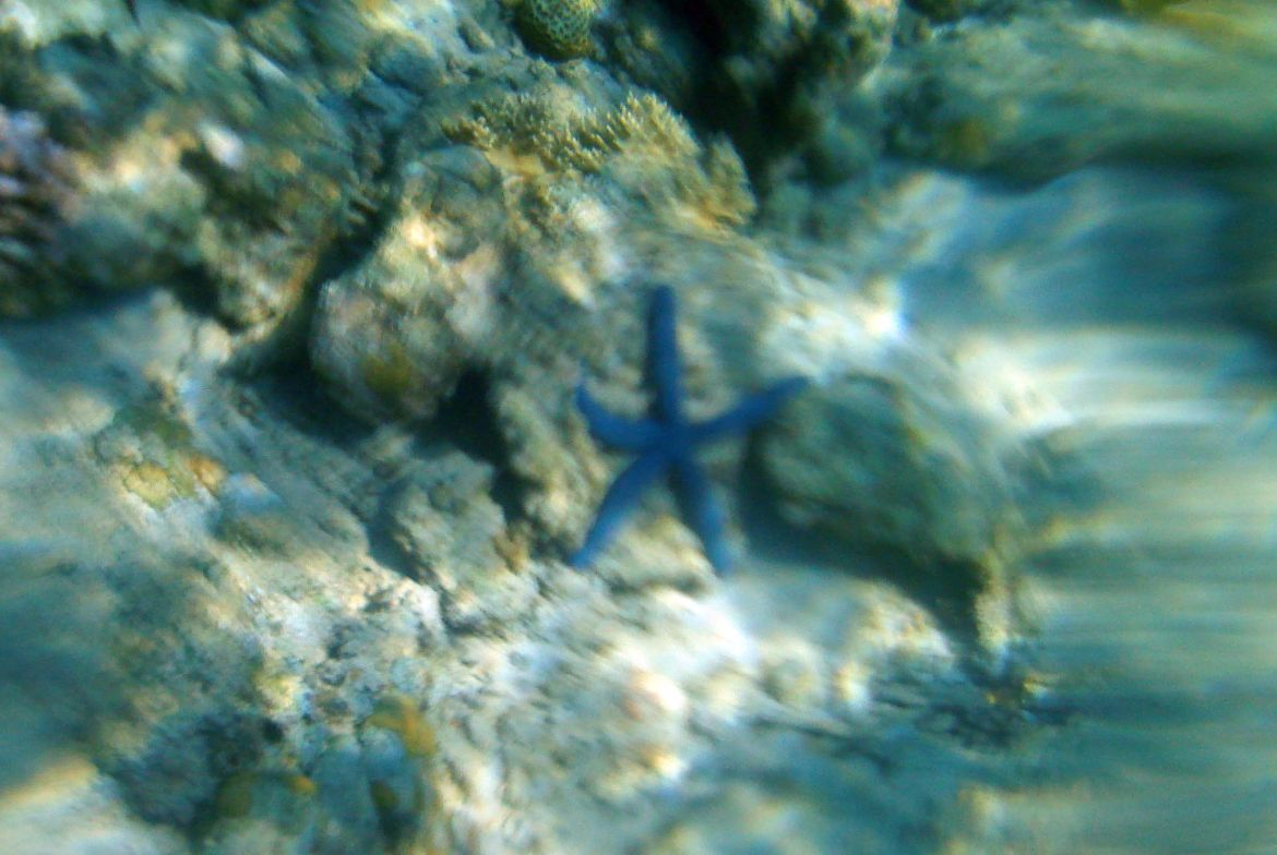 Babi Beach snorkeling blue star fish